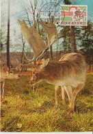 Danemark Carte Maximum 1970 Animaux Daim 503 - Cartoline Maximum
