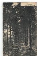 ZOERSEL  Dreef Van 't Zoerselhof 1908 - Zoersel