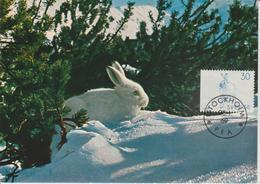 Suède Carte Maximum 1968 Animaux Lièvre 604 - Maximumkaarten (CM)
