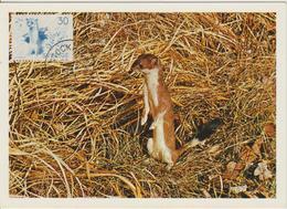 Suède Carte Maximum 1968 Animaux Hermine 608 - Maximum Cards & Covers