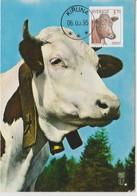 Suède Carte Maximum 1995 Animaux Vache 1842 - Maximum Cards & Covers
