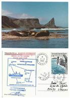 Eléphants De Mer - Baie Larose - Kerguelen - TAAF - Animaux & Faune