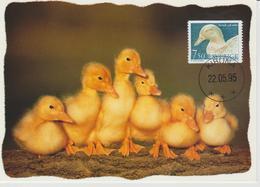 Suède Carte Maximum 1995 Animaux Canard 1852 - Maximum Cards & Covers