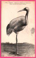 Paris - Museum D'Histoire Naturelle - Grue De Mandchourie ( Chine ) - Edit. BOSLE - Birds