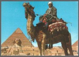 CP GIZA , Camel Driver Near The Sphynx And Khafre Pyramid - Sphinx