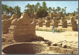 CP KARNAK , The Famous Sphynx Avenue At Amon Temple - Sphinx