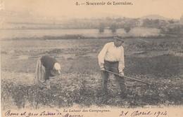 88 - Vosges - Souvenir De Lorraine - Le Labeur Des Campagnes - L'Arrachage Et Ramassage De Pommes De Terre - Autres Communes