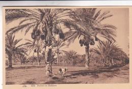 PALMIERS DATTIERS. CAP. NON CIRCULEE CIRCA 1930s - BLEUP - Egypte