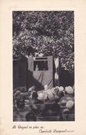 Postcard Le Guignol En Plein Air Openlucht Poesjenellenspel Punch And Judy Puppet Theatre Interest My Ref  B12749 - Theatre