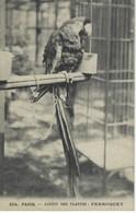 CPA OISEAU PERROQUET - Jardin Des Plantes PARIS - Uccelli
