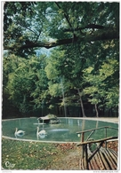 17 - La Roque D'Anthéron - Cygnes En Liberté Dans Le Parc Du Château - Autres Communes