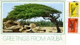 ARUBA  NETHELANDS ANTILLES  The Famous Divi-Divi  Nice Stamps Antillen Bonaire St Marten - Aruba