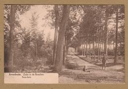 Averbode (Scherpenheuvel - Zichem) Zicht In De Bosschen  Sous - Bois - Scherpenheuvel-Zichem