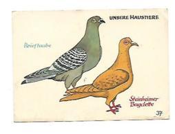 BRIEFTAUBE-STEINHEIMER BAGDETTE Junggenherbergsgroschen - Vögel