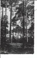 BARBIZON (France 77) La Forêt (voyagé 1952) - Barbizon