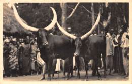 Ruanda Urundi / 18 - L' Afrique Qui Disparait - Bétails Sacrés - Ruanda-Urundi