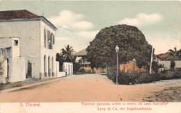 Sao Tome Et Principe / 15 - Enorme Parasita Sobre O Muro Da Casa Salvador - Belle Oblitération - Sao Tome Et Principe