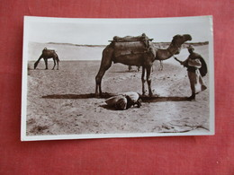 RPPC La Priere Dan Le Desert  Camel         Ref 3118 - Postcards
