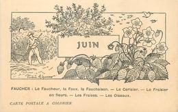 CARTE POSTALE A COLORIER LES MOIS - JUIN - FAUCHEUR FAUX ... - Autres