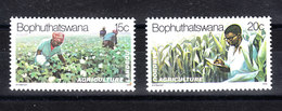 Bophuthatswana  - 1979. Coltivazione Del Cotone E Del Mais. Cultivation Of Cotton And Maize.MNH - Agricoltura