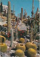La Côte D'Azur - Jardin Exotique.  (SCAN VERSO) - Cactus