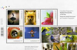 2010 Canada Canadian Geographic's Wildlife Photography Fauna Nature Bird Mini Sheet MNH - Stamps