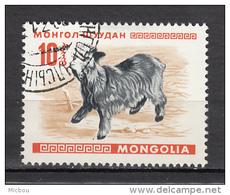 Mongolie, Mongolia, Yak - Ferme