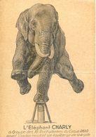 Cirque - L'Elephant Charly Du Groupe Des 16 Pachydermes Du Cirque Amar - Equilibre Sur 1 Patte - Circus