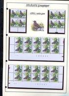Belgie 2920 CPFL Buzin Vogels Birds Feuille De Collection Numéro De Planche Plaatnummer Drukdatum - 1985-.. Birds (Buzin)