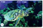 4 Telecartes En PUZZLE Turtle – Tortoise – Tortuga Marina – Schildkroete – Tartaruga – Tortue – Schildpad (474) - Tortues