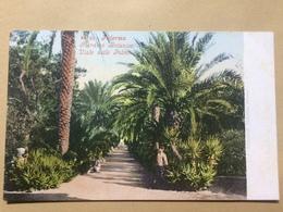 ITALY - Palermo - Giardino Botanico - Viale Delle Palmei - Photochromiekarte 3638 - Palermo