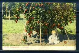 K09560)Ansichtskarte: Kuba - Orange Grove - Ansichtskarten