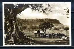 K09615)Ansichtskarte: Landschaft Am Waterberg - Namibia