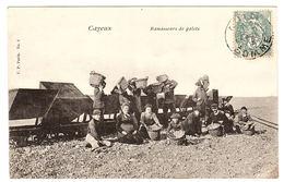 CAYEUX (80) - Ramasseurs De Galets - Ed. V. P. Paris N°2 - Cayeux Sur Mer