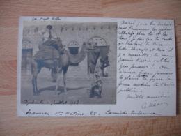 Carte Photo Photographie 1903 Djibouti  Colon Sur Chameau - Djibouti