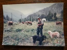 Casterino. Berger Et Son Troupeau De Vaches à Casterino - France
