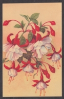 93393/ FLEURS, Illustration, Fuchsias - Bloemen