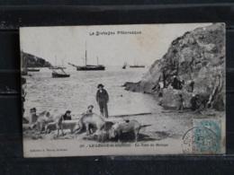 GX - 22 Le Légué St Brieux - La Cale De Halage - Edition Warron - 1907 - Cochons - Saint-Brieuc