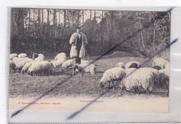 Echassier Landais (40) Gardant Ses Moutons - France