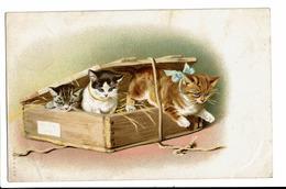 CPA - Carte Postale - Belgique -Fantaisie Avec Trois Chattons Dans Une Caisse-1907-S4726 - Chats