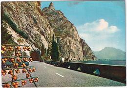 Lago Di Garda: OPEL OLYMPIA REKORD - Oranges - Gardesana Occidentale  - (Italia) - 1963 - Turismo