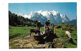 Wetterhorngruppe - Elevage