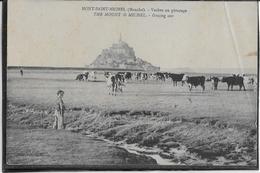 Mont St Michel - Vaches Au Pâturage - Le Mont Saint Michel