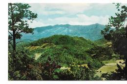 Great Smoky Mountains National Park (Tennessee, USA  MONT LE CONTE SMOKEY - Smokey Mountains