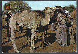 CP Komaroc N° 3-Maroc Typique-Marché Au Chameaux - Marchés