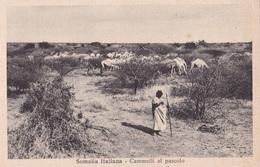 SOMALIA ITALIANA CAMMELLI AL PASCOLO AUTENTICA 100% - Somalie