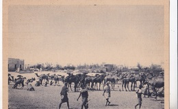 SOMALIA ITALIANA MERCATO DEI CAMMELLI AUTENTICA 100% - Somalia