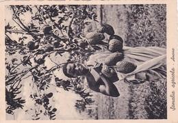 SOMALIA AGRICOLA ANONE AUTENTICA 100% - Somalia