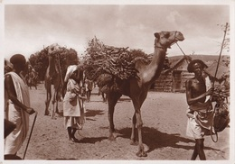 SOMALIA ITALIANA TRASPORTO DI LEGNAME AUTENTICA 100% - Somalia