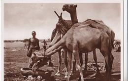 SOMALIA ITALIANA ABBEVERATA AUTENTICA 100% - Somalie